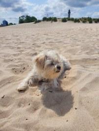 weisser-hund-am-strand