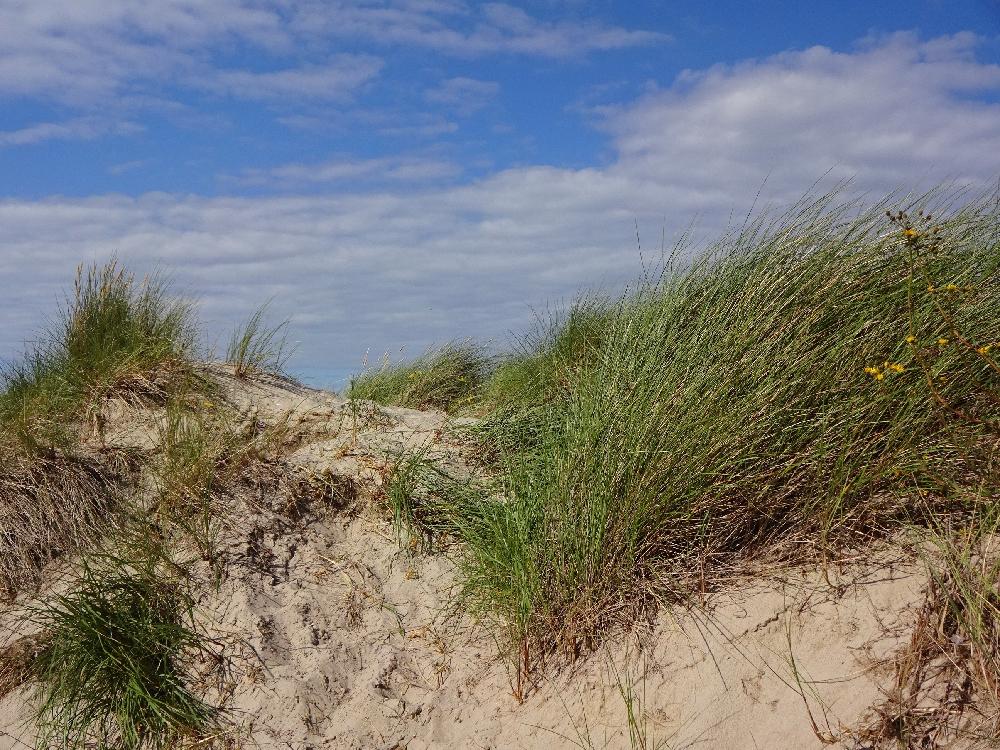 ostsee-strand-dünen