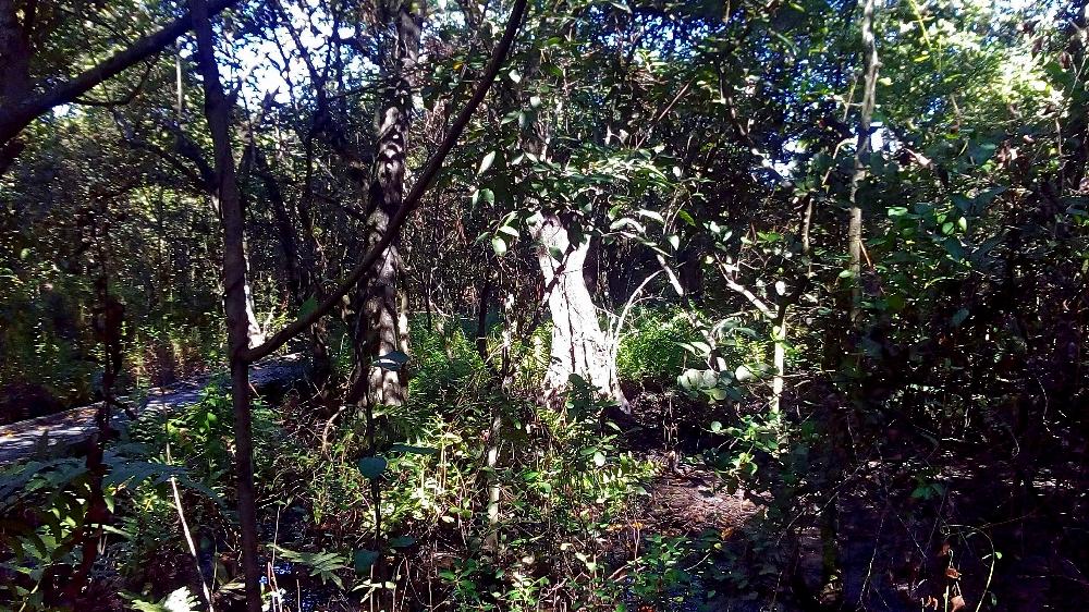 secret-woods-fort-lauderdale