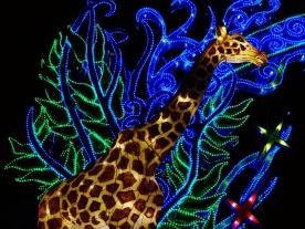 giraffe-zoo-münster