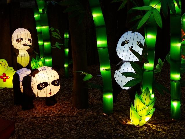 pandas-zoo-münster