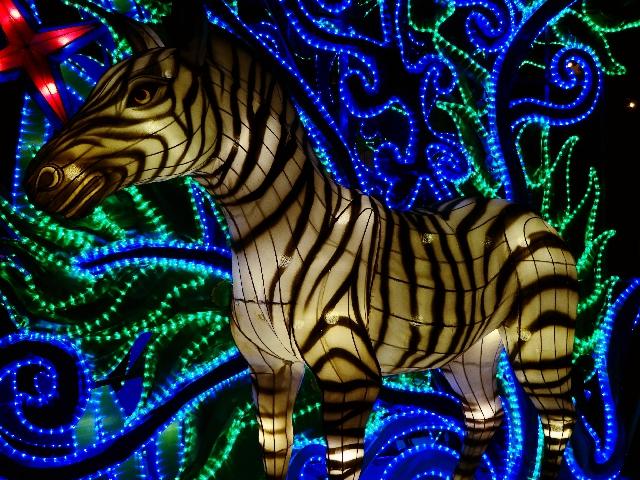 zebra-zoo-münster