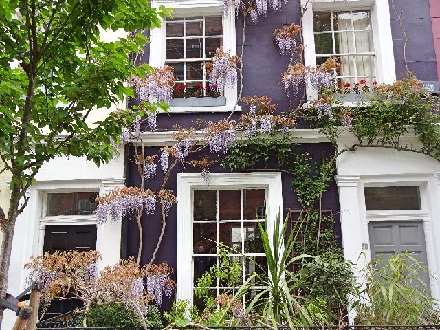 wisteria-london