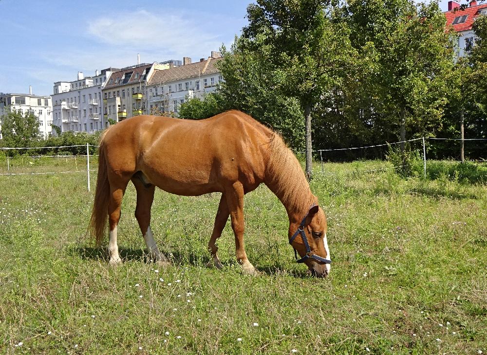pony-moritzhof