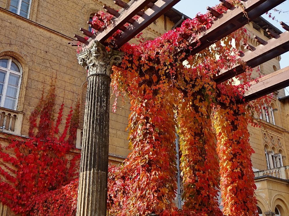 säulen-efeu