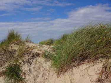 strand-duene