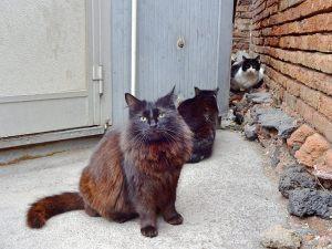 drei-katzen