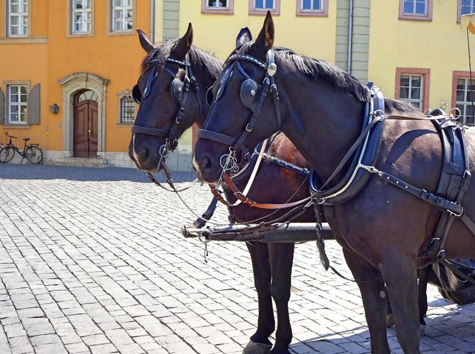 zwei-kutschpferde