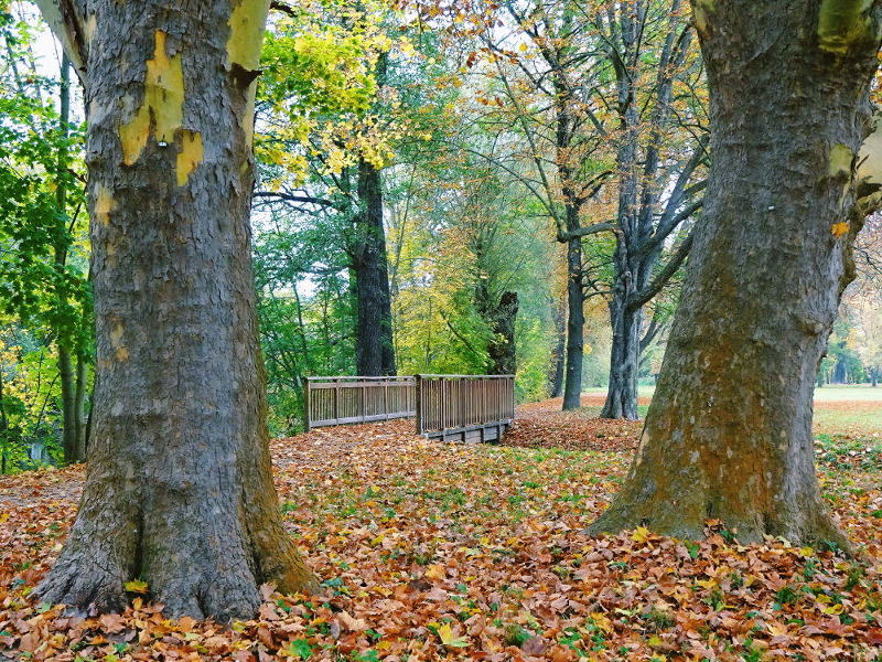 bäume-im-park