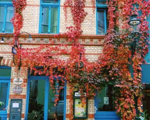 rote-weinblätter-an-hausfassade