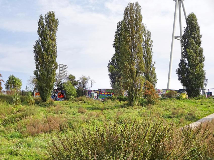 park-mit-bäumen-und-wiese