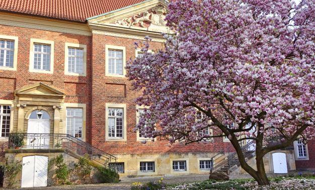 blühender-magnolienbaum-am-domplatz-muenster