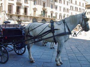kutsche-mit-pferd