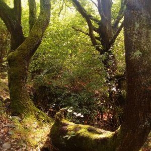 verwunschene-bäume