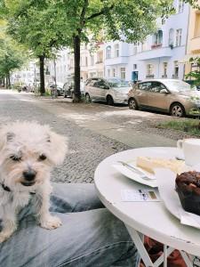 hund-am-kaffeetisch