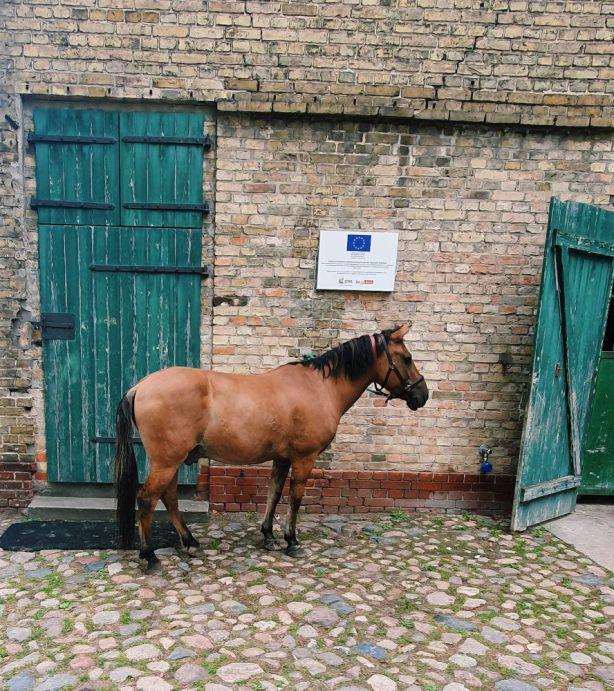 braunes-pferd-vor-stall