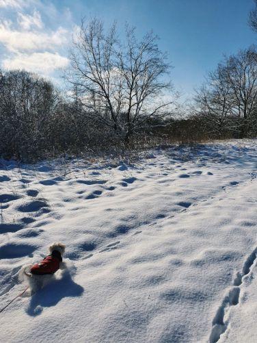 hund-mit-mantel-im-schnee