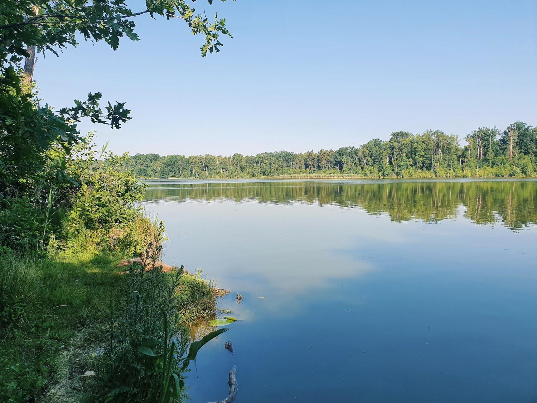 waldsee-im-sommer